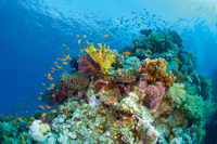 Sahl Hasheesh's bright and exotic diving spots