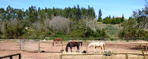 stables and horses in portugal