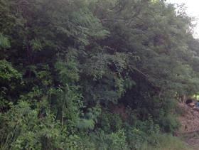 Image No.6-Terre à vendre à Gros Islet