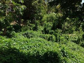 Image No.1-Terre à vendre à Castries