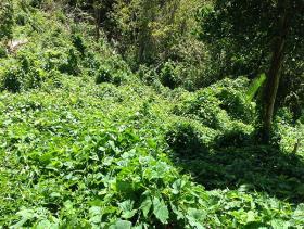 Image No.4-Terre à vendre à Castries