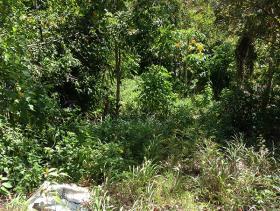 Image No.5-Terre à vendre à Castries