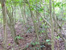 Image No.2-Terre à vendre à Monchy