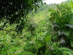 Image No.4-Terre à vendre à Monchy