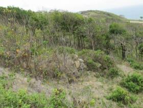 Image No.6-Terre à vendre à Cap Estate