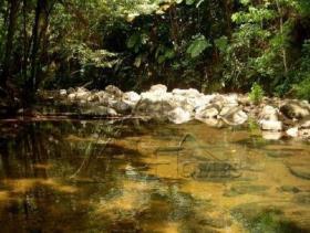 Image No.2-Terre à vendre à Micoud