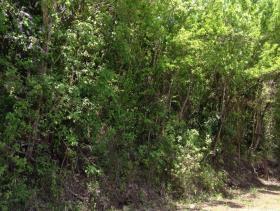 Image No.12-Terre à vendre à Gros Islet