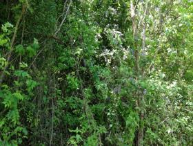 Image No.13-Terre à vendre à Gros Islet
