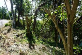 Image No.5-Terre à vendre à Cap Estate