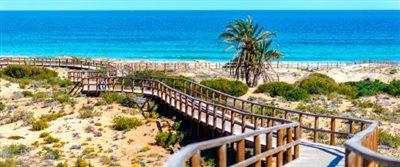 C9_Los-Arenales-del-Sol-beach--Alicante