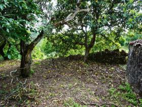 Image No.11-Chalet de 1 chambre à vendre à Condeixa-a-Nova