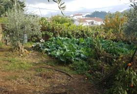Image No.22-Maison de 3 chambres à vendre à Pampilhosa da Serra