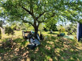 Image No.19-Terre de 1 chambre à vendre à Pedrógão Grande