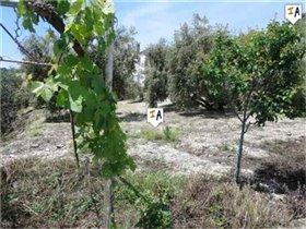 Image No.6-Ferme de 5 chambres à vendre à Rute
