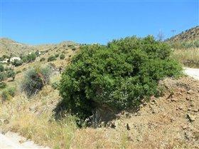 Image No.1-Terrain à vendre à Agia Galini