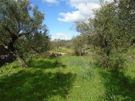 Image No.3-Terrain à vendre à Messinia
