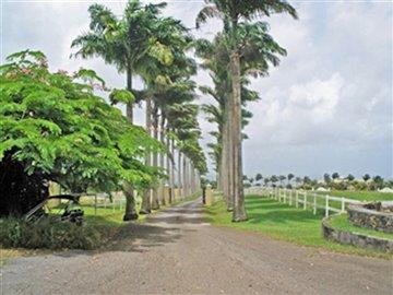 lion-castle-plantation-house-cb000117-2