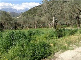 Image No.12-5 Bed Land for sale