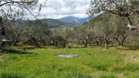 Image No.5-Terre de 5 chambres à vendre à Casoli