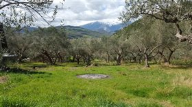 Image No.5-5 Bed Land for sale