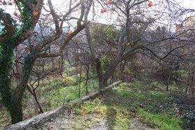 Image No.5-Maison de 3 chambres à vendre à Abruzzes