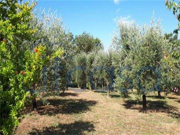 18-11-20-AR229-Ext-olive-grove