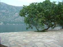 Image No.1-Villa de 5 chambres à vendre à Prcanj