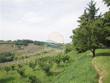 azienda-agricola-vendita-ovada-16