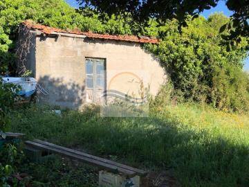 A-TRUSTICO-BORDIGHERA-IV10682
