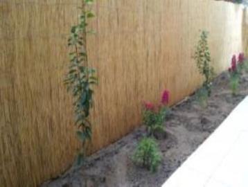 Moni-garden-2