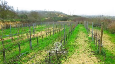 124685-agricultural-land-for-sale-in-pano-aro