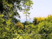 Image No.4-Terrain à vendre à Ulcinj