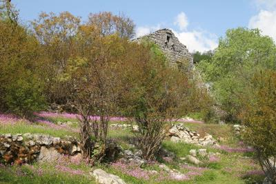 Large-plot-with-a-house-and-two-ruins-for-sale--Skadar-Lake--13171--11-_1600x1067
