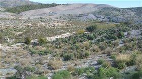 Image No.0-Terre à vendre à Almeria