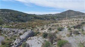 Image No.3-Terre à vendre à Almeria