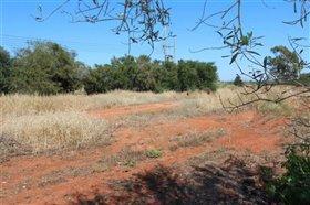 Image No.0-Terre à vendre à Avgorou