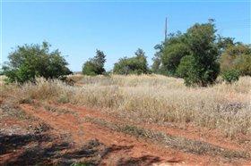 Image No.1-Terre à vendre à Avgorou