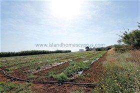 Image No.2-Terre à vendre à Ayia Triada