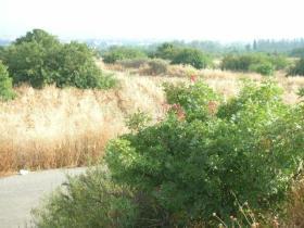 Image No.2-Terre à vendre à Tala