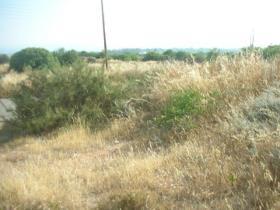 Image No.3-Terre à vendre à Tala