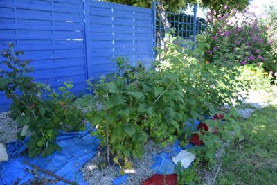 DSC_6335-jardin