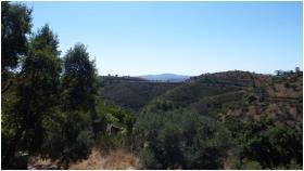 Image No.5-Terre à vendre à Tavira