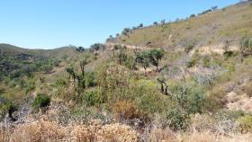 Image No.7-Terre à vendre à Tavira