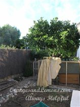 Image No.23-Villa de 2 chambres à vendre à Marxuquera