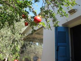 Image No.24-Villa / Détaché de 1 chambre à vendre à Asini