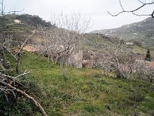 Image No.14-Grange à vendre à Belmonte Calabro