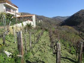 Image No.1-Villa de 3 chambres à vendre à Cetraro