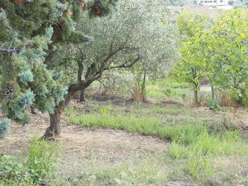 serra-d-aiello-house20GPland