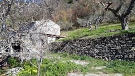 Image No.8-Ferme de 2 chambres à vendre à Belmonte Calabro