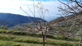 Image No.10-Ferme de 2 chambres à vendre à Belmonte Calabro